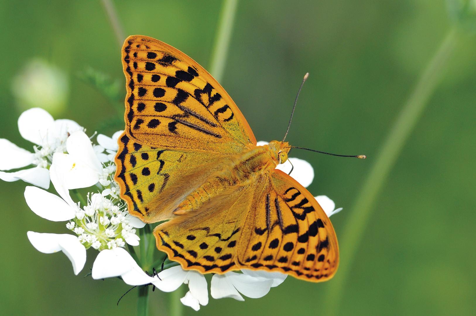 Farfalla Giardino Botanico